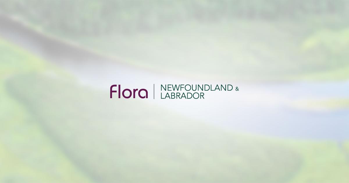 newfoundland-labradorflora.ca
